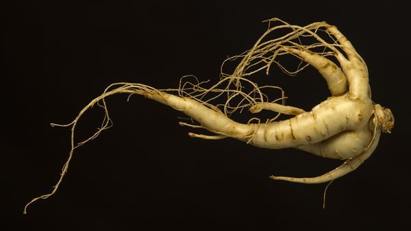 rădăcină și erecție de ginseng
